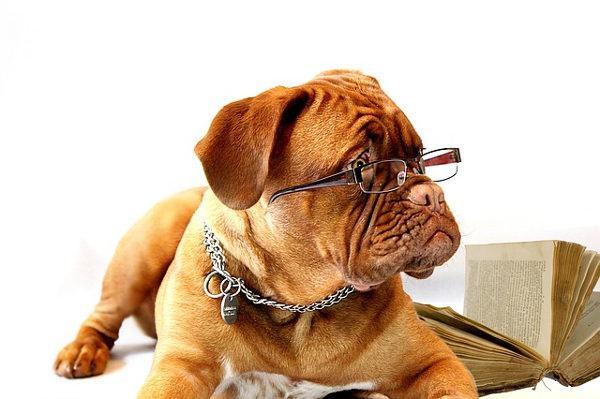 Cane saggio con occhiali