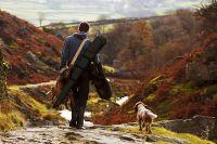 Qual è il cane da caccia più adatto?