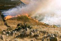 Gli uccelli rapaci come il Nibbio sarebbero in grado di appiccare incendi