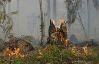 Cacciatore denunciato, incendiava i terreni vicini alle postazioni rivali