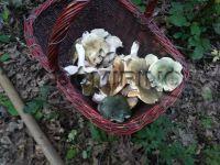 Piogge e bel tempo, inizia la nuova stagione dei funghi
