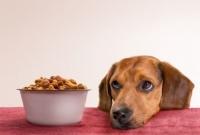 Come scegliere i croccantini per il cane