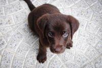 Il primo giorno in casa del nuovo cucciolo