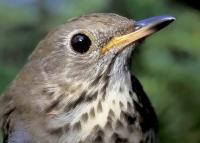 Sospensione anticipata al 20 gennaio a tre specie