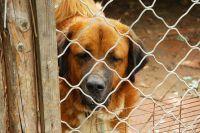 Reggio Calabria, ex presidente della lega per la difesa del cane sottraeva i soldi pubblici destinati al canile e maltrattava gli animali