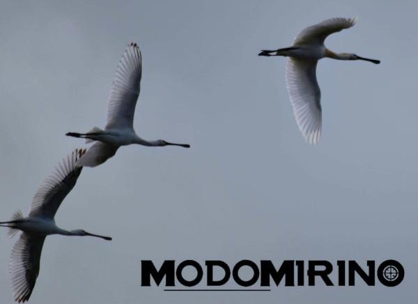 Le incredibili migrazioni degli uccelli