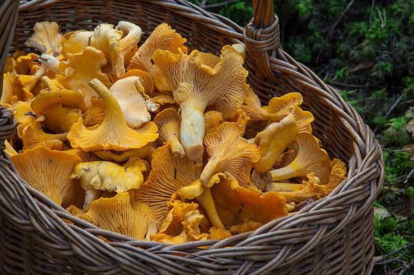 Novità cercatori funghi liguria