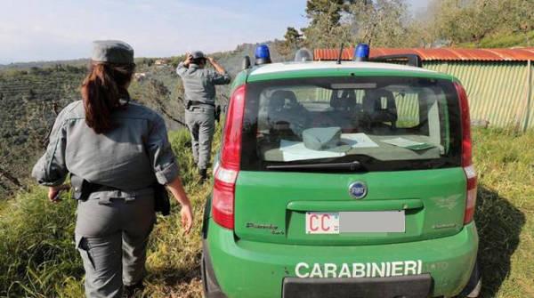 carabinieri forestale palermo