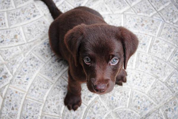 Cucciolo Primi Giorni